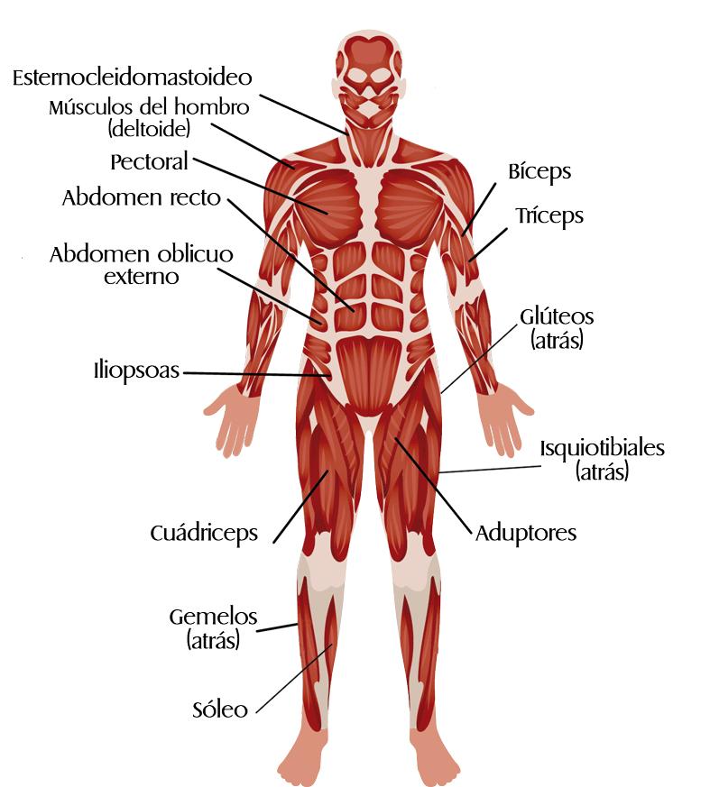 musculos-jugando-padel